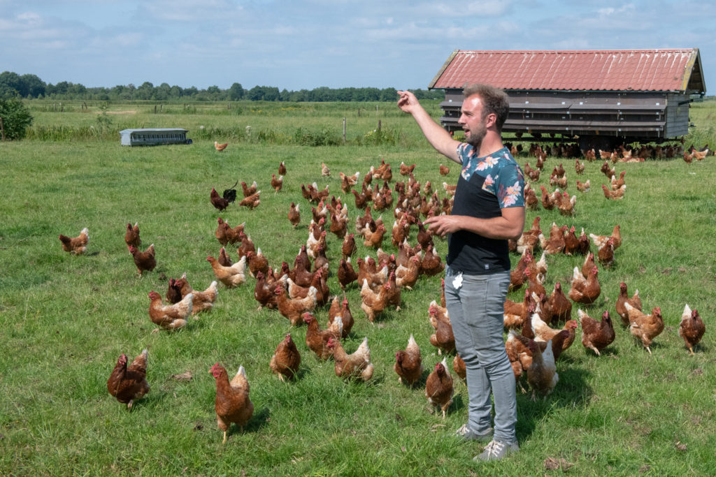 Free-range chickens are carted from field to field in portable coops. In addition to the eggs, the chickens keep pests down in the fields.