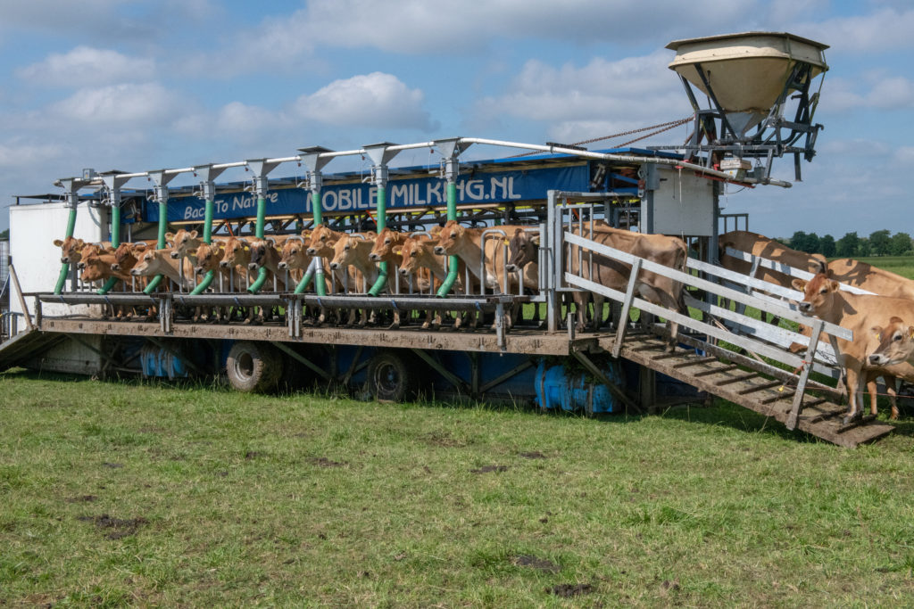 The moveable milking parlor remains in the field, allowing Bart to move it as he rotates pastures.